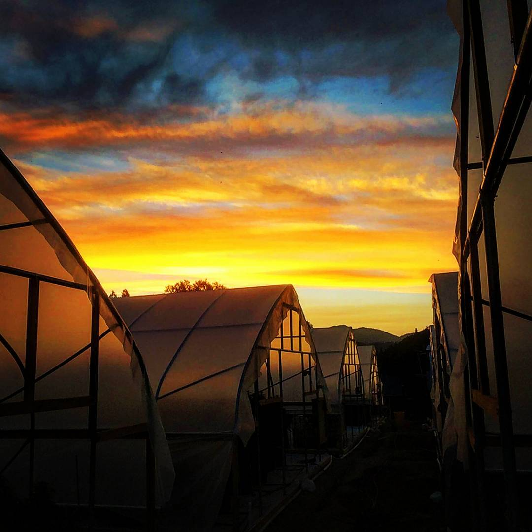 Managing Light Leaks