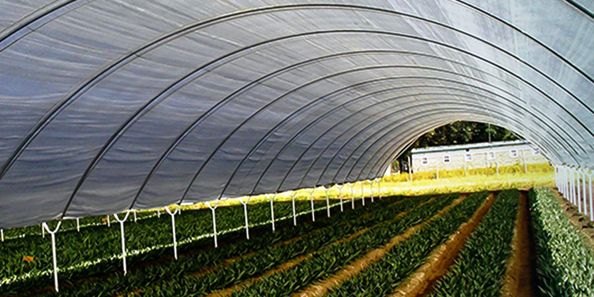 Solarig Greenhouse Covering Poly