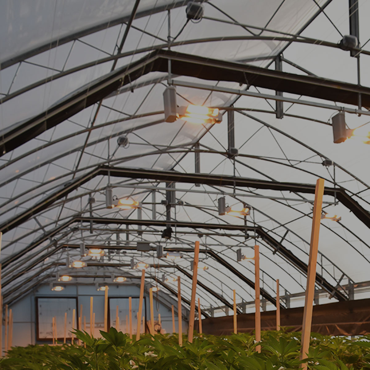 Guardian series interior light deprivation greenhouse