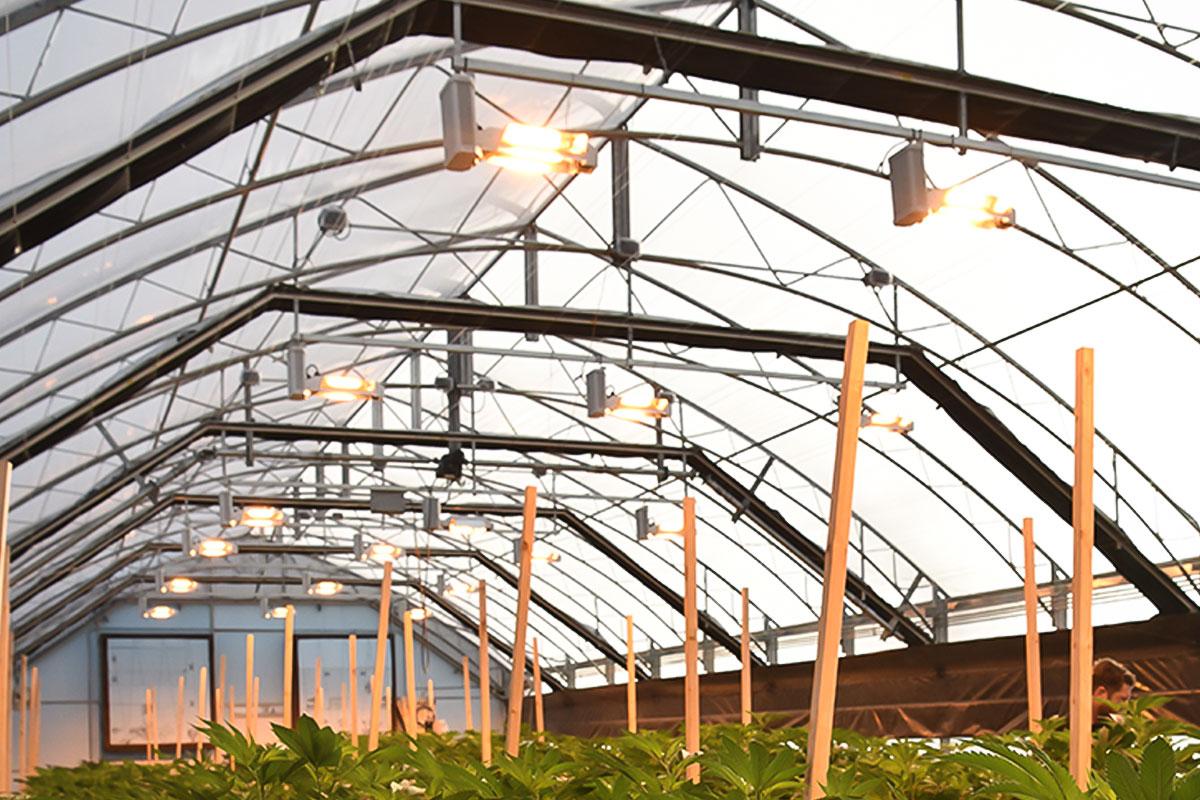 Guardian Greenhouse series