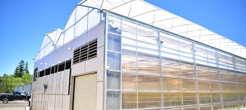 Interior Light Dep greenhouses for hemp and cbd
