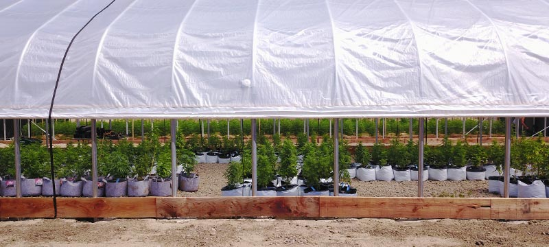 Exterior blackout greenhouse for cannabis