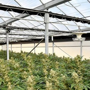 Interior blackout greenhouse for cannabis