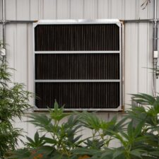 High End Exhaust Fan in a Cannabis Greenhouse